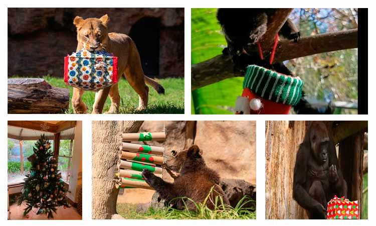 animales festejan navidad
