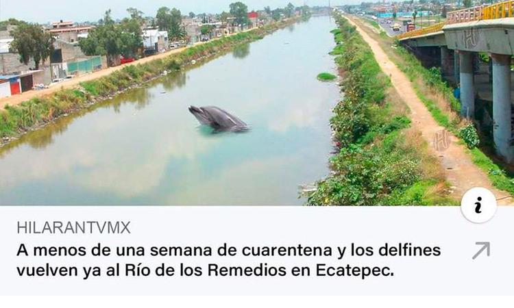 Delfines Ecatepec Meme