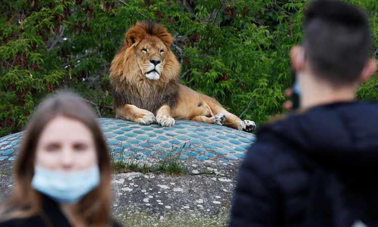leones covid