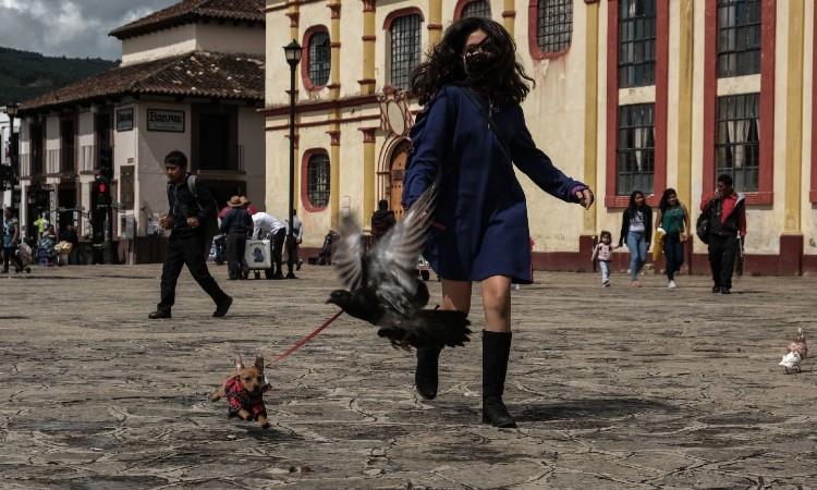 López-Gatell: improbable que mascotas contagien COVID-19 a humanos