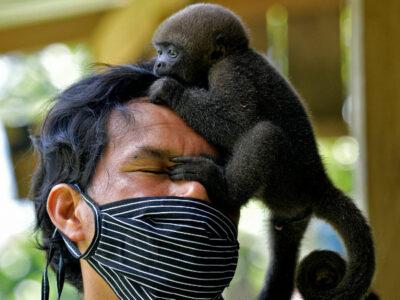Indígena rescata y rehabilita monos huérfanos por la cacería en la selva amazónica