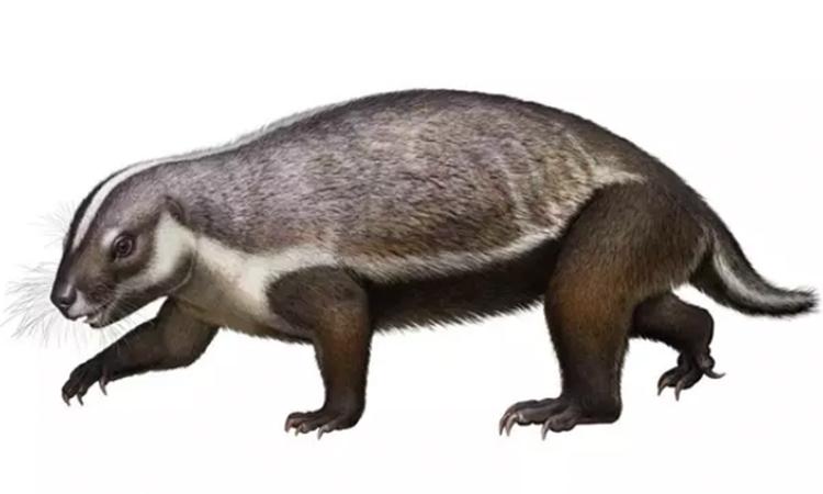 El extraño mamífero que vivió entre los dinosaurios
