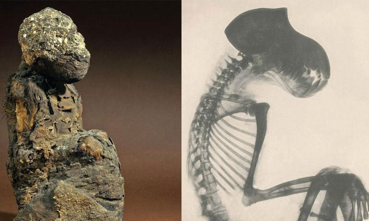 """Momias de babuinos revelarían lugar de la """"Tierra de Dios"""""""