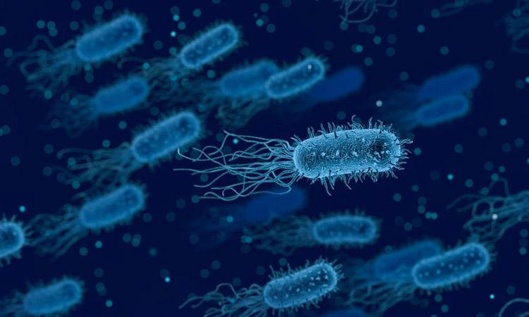 10 mil infectados por brucelosis en China