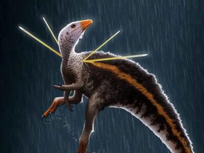 Descubren fósiles de dinosaurio con melena y varillas