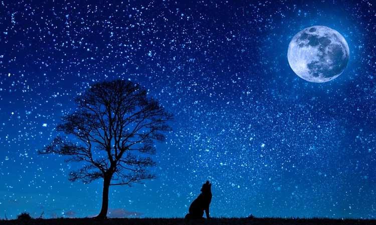 La última luna llena o de lobo