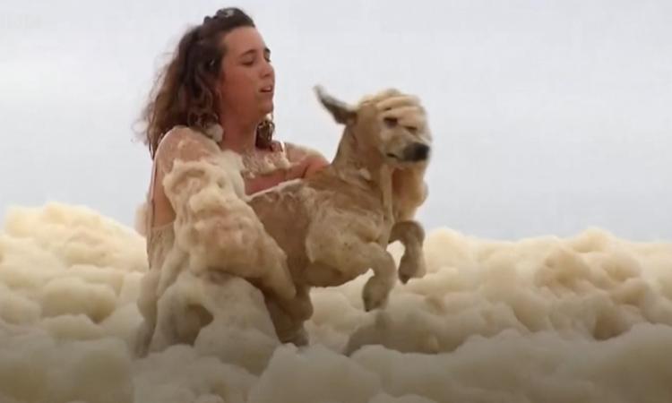 perro rescatado en Australia
