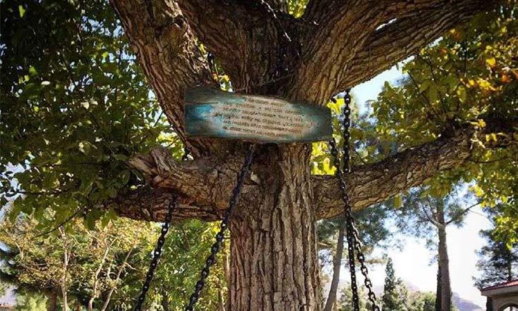 árbol preso de pakistan