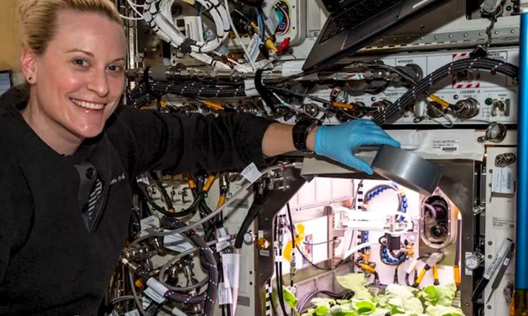 Cultivan la primera cosecha de rábanos en el espacio