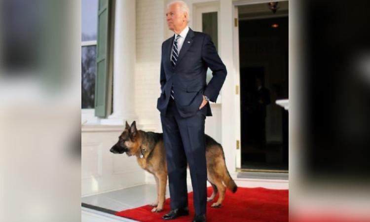 Conoce a Champ y Major, los perros que vivirían con Joe Biden en la Casa Blanca
