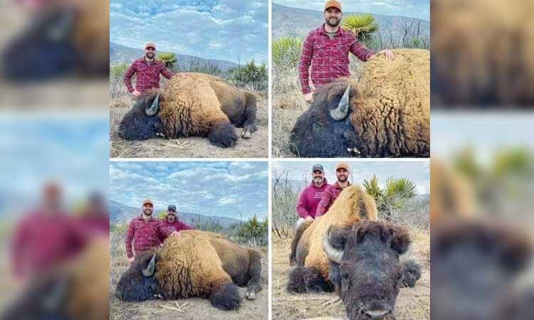 Caza de bisonte en Coahuila genera polémica en redes sociales