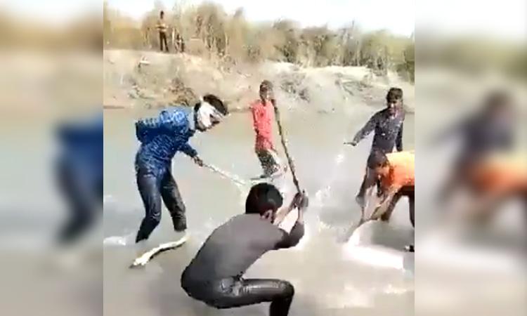 Matar A Golpes A Un Delfin