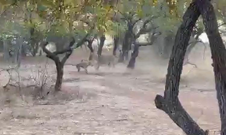 Perrito callejero se enfrenta con una leona en parque de India