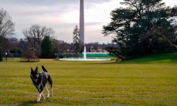 perros de Biden