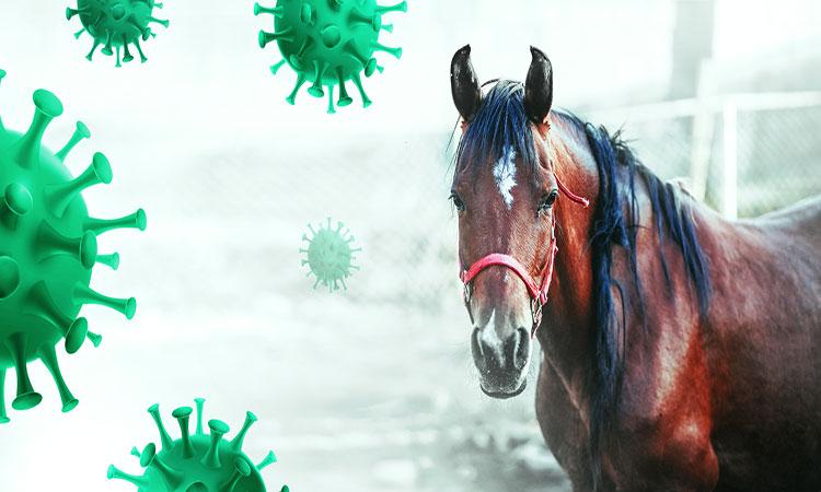 México podría utilizar suero equino para reducir mortalidad de COVID-19