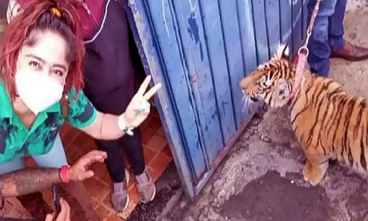 Puebla: pasea a su tigre con todo y correa