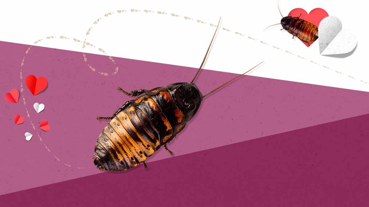 14 de febrero ex cucaracha