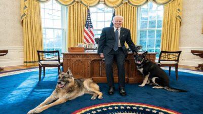 Joe Biden presume foto de sus perros dentro del Despacho Oval