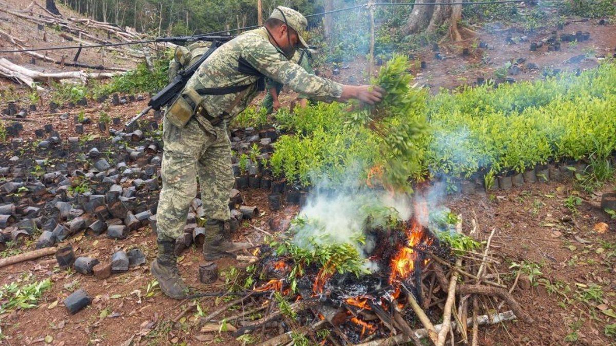 En Guerrero, hallan primer plantío y narcolaboratorio de cocaína