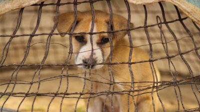 Puebla sanciona por primera vez el maltrato animal