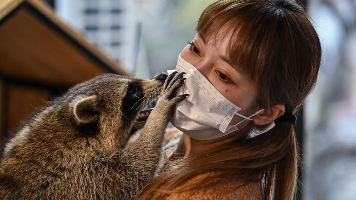 China: así son cafeterías con animales exóticos