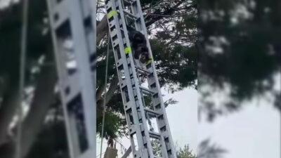"""Gatito queda atrapado en árbol y se """"autorescata"""" al llegar los bomberos"""