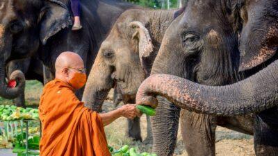 Tailandia: Así fue el día Nacional del elefante 2021