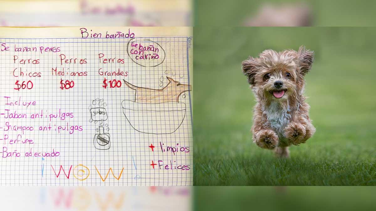 Nuevo León: Con dibujo, niño anuncia su negocio de bañar perritos