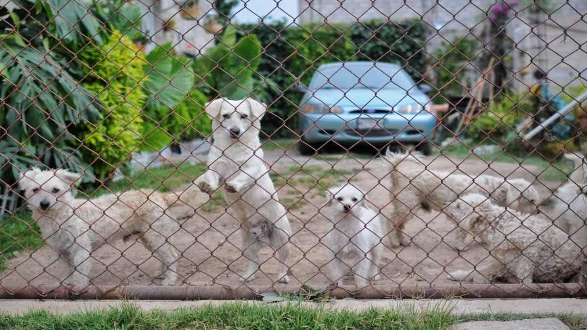 Puebla Capital investiga a trabajadores por maltrato animal