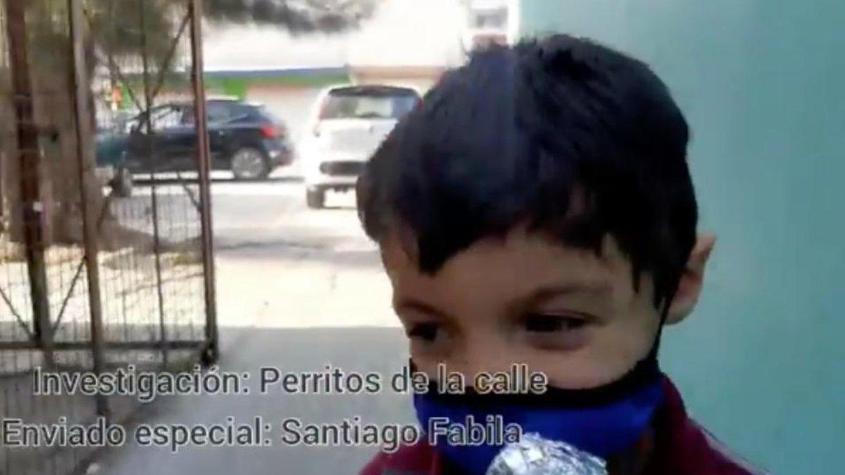 PERRITOS DE LA CALLE