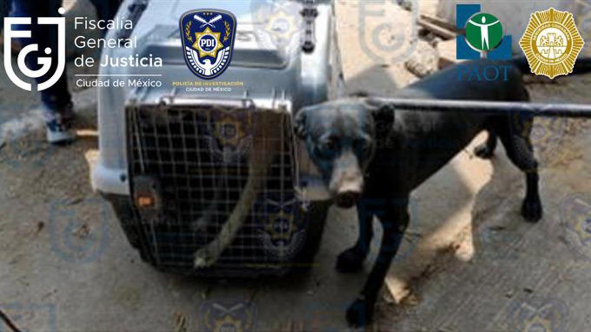 CDMX: Aseguran a 26 perros en departamento de Iztapalapa