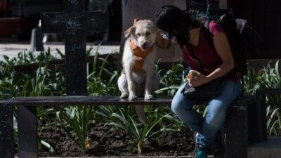 Aprueban estas sanciones por maltrato animal