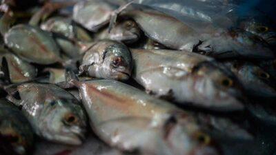 pescado Cuaresma