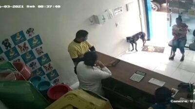 perro llega a veterinaria