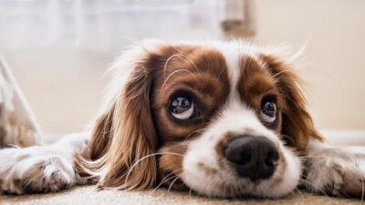 reto viral de tiktok para perros