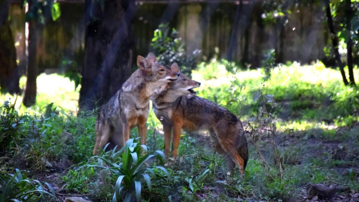 Zoológicos de CDMX reabren sus puertas; ve aforo y medidas