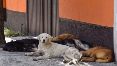 Cachorros adopción