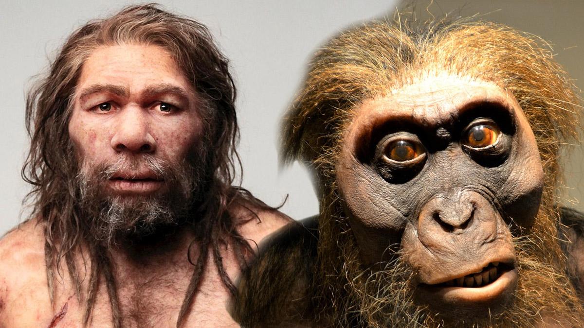 Homo Sapiens Genes Neandertal