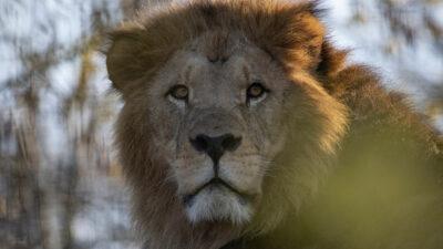The New Big 5: iniciativa que busca salvar a estos animales salvajes de la caza