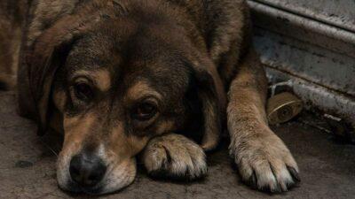 CDMX alista iniciativa de ley de protección animal