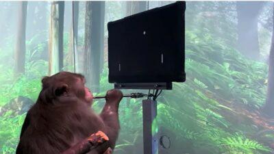 Mono Chip Cerebral Musk Videojuego