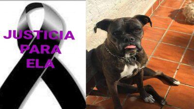 Morelos: muerte de perrita Ela es caso histórico