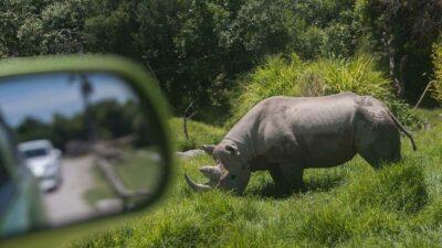 Rinocerontes crecen en número de población en Nepal