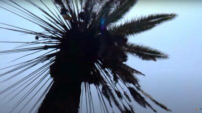 incendio en palmera