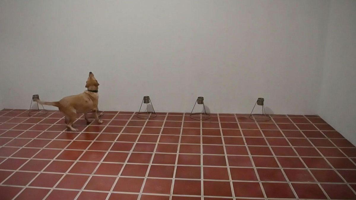 El Salvador entrena perros para detectar COVID-19