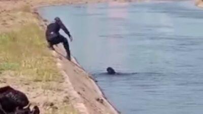 En Culiacán, Sinaloa, policía salva a perro de morir ahogado; ve video