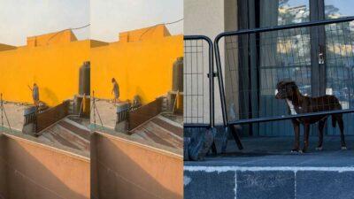 Puebla: denuncian en redes maltrato de perrito en azotea