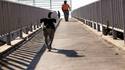 Michoacán: baila sobre puente peatonal y baja con singular estilo