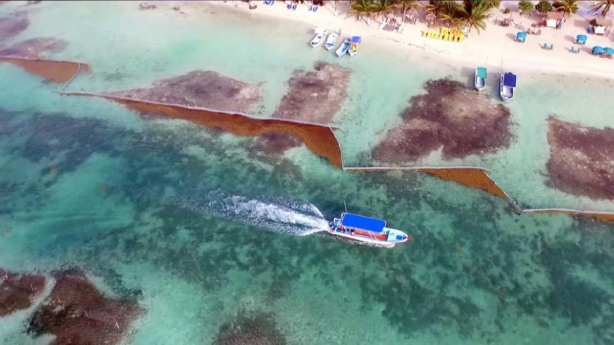 En Quintana Roo instalan barreras artesanales para contener sargazo