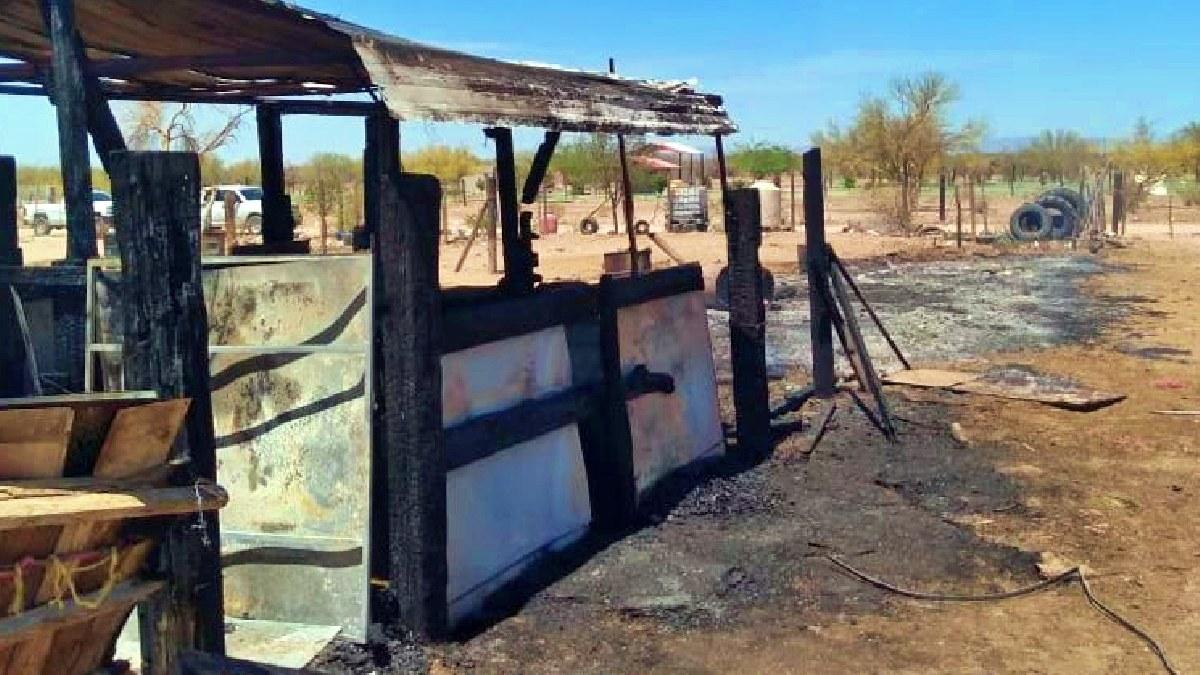 Sonora: muere yegua de 8 meses en incendio en caballeriza de Hermosillo